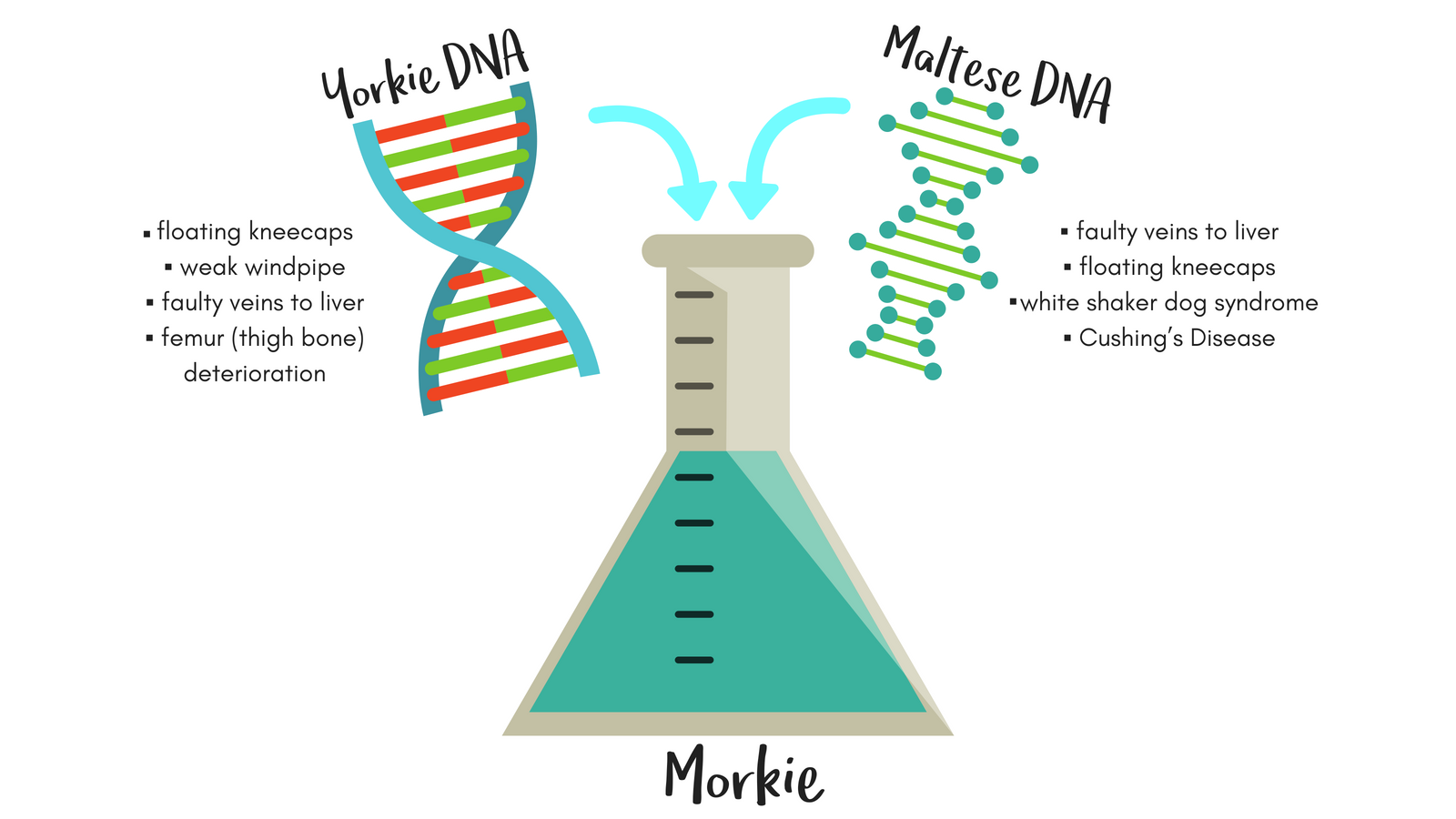 Morkie-DNA About Morkies